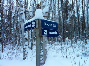 Temiskaming Nordic - Ski Northern Ontario - Our Trail System